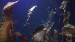 Fish swimming in aquarium, underwater life Stock Footage