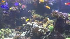 Colorful underwater diversity of the coral reef with many exotic fish Stock Footage