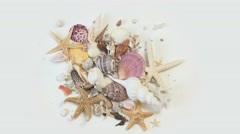Stack of sea shells and starfish Stock Footage