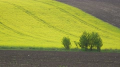 Green and brown parcels, spring agriculture, sunny spring day, beautiful view Stock Footage