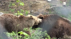 Couple of bears loving each other, caress, kiss, love Stock Footage