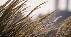 Weeds dancing in the sunlight - summer 2016 - 4k Stock Footage