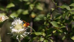Insect collecting pollen from white plant Stock Photos