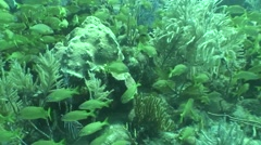 Underwater life diving Video Cuba Caribbean Sea Stock Footage