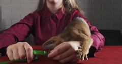 Abyssinian kitten playing with ribbon and teen girl Stock Footage