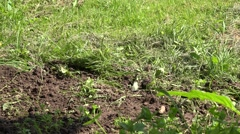 Group of white butterfly fly meadow at sunny day country. 4K Stock Footage