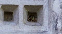 Slow motion wasps nesting in vent Stock Footage