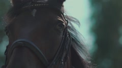 The eyes of the horse. Muzzle horse. Horse Blinking in slow motion Stock Footage