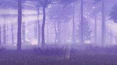 Foggy and magic pine forest 4K Stock Footage