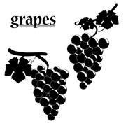 Vector illustration of grapes. Stock Illustration