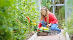 Adorable little girl collecting harvest cucumbers and tomatoes in greenhouse Stock Footage