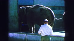 1963: an elephant is seen and a person is seen viewing it FRANCE Stock Footage