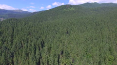 Forest in the Ukrainian Carpathians. flight quadrocopters Stock Footage
