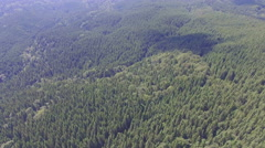 Forest in the Ukrainian mountains. flight quadrocopters Stock Footage