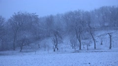 4k Heavy storm snow fall on rural orchard tree bad weather in winter cold season Stock Footage