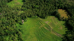Aerial view Ubud plantation farming rice terraces Bali Indonesia Southeast Asia Stock Footage