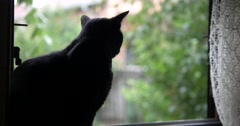 Black cat on window, scared of lightning / thunder Stock Footage