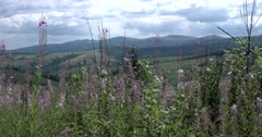Steadicam Shot of Hiking Through a Trail in the Carpathians Mountains Stock Footage