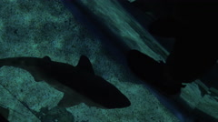 Glass floor and swimming small shark in ocenanarium Stock Footage