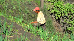 Asian male working on his farm growing rice and vegetables Java Indonesia Stock Footage