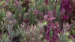 Meadow color change Stock Footage
