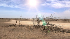Parched dry tree in the barren abandoned landscape - Africa Stock Footage