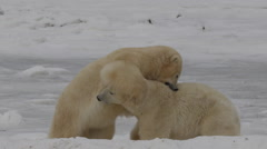 Slow motion - two polar bears bight and wrestle on the sea ice Stock Footage