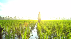 Asian female manual worker in the tropical rice fields of Java Indonesia Stock Footage