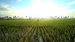 Female manual worker with irrigation tool farming Indonesian rice fields Java Stock Footage