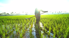 Manual female worker with irrigation tool farming Indonesian rice fields Java Stock Footage