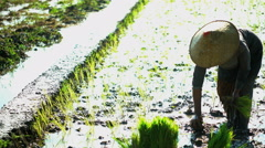 Rural farm worker planting seedlings in rice fields Java South East Asia Stock Footage