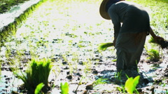 Female field worker planting rice seedlings fertile soil in Java Indonesia Stock Footage