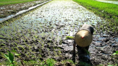 Traditional female field worker planting rice seedlings in Java Indonesia Stock Footage