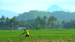 Manual farm worker using tool for irrigation in rice fields Mt Merapi Java Stock Footage