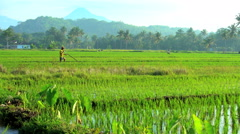 Rural farm worker irrigating land with hand tool in rice fields Mt Merapi Java Stock Footage