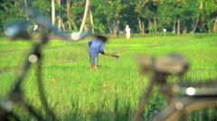 Workers bicycle by male manual farmer irrigating rice field Java Indonesia Stock Footage