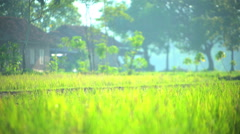 Male manual worker using motor driven cultivator in rice field Java Indonesia Stock Footage