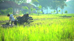 Tropical rice fields being ploughed by Indonesian male Java Stock Footage