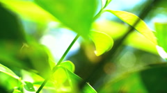 Sunlight sun flare view of tropical Rainforest vegetation Asia Stock Footage