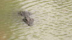 Nile crocodile swimming in the river - Africa Stock Footage