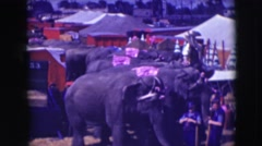 1948: for the first time meet a group of elephants in this unique circus meeting Stock Footage
