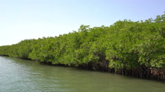 Mangrove trees in the coastline - motor boat ride Stock Footage