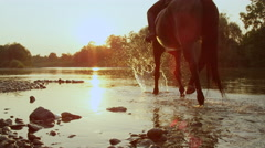 CLOSE UP: Two riders riding dark brown and palomino horse along river at sunset Stock Footage
