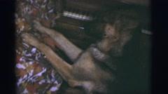 1967: german shepherd wants woman's attention TUCSON, ARIZONA Stock Footage