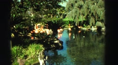 1969: natural and calming water scene of trees and vibrant landscaping RENO, Stock Footage