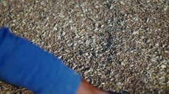 Warehouse wheat after harvest Stock Footage
