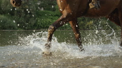 CLOSE UP: Dark brown horse walking in water along rocky riverbank Stock Footage