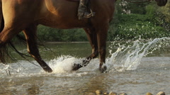 CLOSE UP: Muscular dark brown horse walking along rocky riverbank Stock Footage