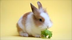 Small rabbit eating celery Stock Footage