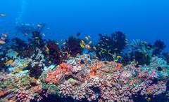 School of Fish near Coral Reef, Maldives Stock Photos